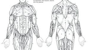 Muscle Coloring Pages Muscle Coloring Pages Human Muscle Coloring