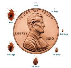 Bed bug sizes Pest Bed Bugs 101 Myth Vs Reality Guardian Pest Solutions Pest Control Blog Guardian Pest Solutions