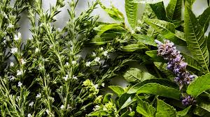 Herb Plant Identification Chart 13 Fresh Herbs And How To Use Them Epicurious