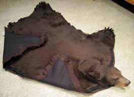 bear gallery how to hang a bear rug on wall designs