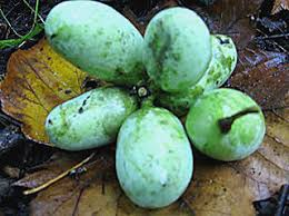 25 Best Fruit Disease Images On Pinterest  Fruit News And ApplesFruit Trees In Michigan