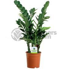 office pot plants. gardenersdream indoor plant mix 3 plants house office live potted pot tree