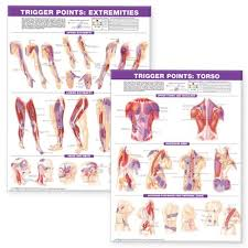 Muscle Pressure Points Chart Trigger Point Chart Set Torso Extremities Paper