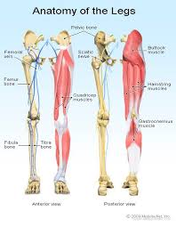 The human leg, in the general word sense, is the entire lower limb of the human body, including the foot, thigh and even the hip or gluteal region. Leg Pain Symptoms Treatments Causes