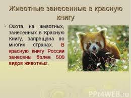Скачать презентация на тему красная книга животные gsm rainbow ru Презентация на тему красноватая книжка животные
