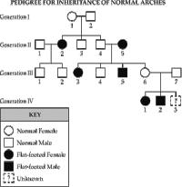 Pedigree Chart For Freckles Ptc Pedigree