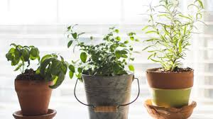 7 easiest herbs to grow in your