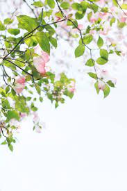 500+ Pink Flowers Pictures [HD ...