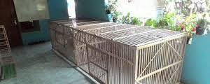 Kandang ayam bangkok dengan 4 pintu, tingkat atas bawah. Ukuran Kandang Ayam Bangkok Dari Bambu 5 Contoh Kandang Ayam Birma Brooding Box Umbaran Cara Membuat Kandang Ayam Bangkok Jpg Brady Mejias
