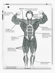 Bodybuilding Muscle Chart Anatomy Diagram Muscle Chart Front Ipad Case Skin By Superfitstuff