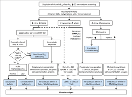 Algorithm For The Diagnosis Of Vitamin B 12 Deficiency In
