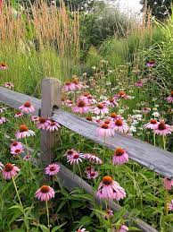 plant wildflowers in your garden and