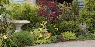 Small Picture Evergreen Borders For Landscaping Hgtvll 11 most essential