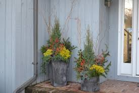 in winter container gardens ancd by dark green conifers add some eye catching interest