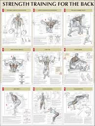 Back Exercises Gym Chart Top 8 Leg Workout Anatomy Gym Workouts Strength Training