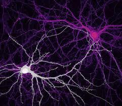 34 Fotos de Neuronas