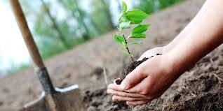 essay tree plantation for honours exam bd results  tree plantation essay for honours exam