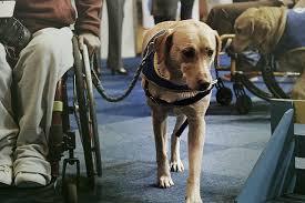 Take To Kids Should Be Takepart Service Allowed School Dogs Uxnwwqa
