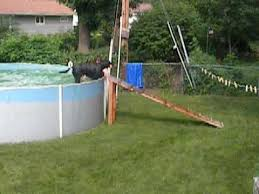 dogs above ground pool