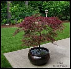 Small Picture 21 Japanese Style Garden Design Ideas Bloodgood japanese maple