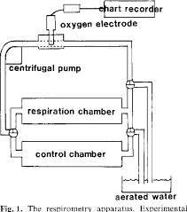 Oxygen Consumption Chart The Effect Of Starvation On Oxygen Consumption And Nitrogen