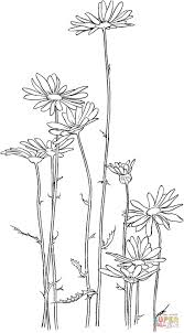 Oxeye Daisy Coloring Page Supercoloring Com