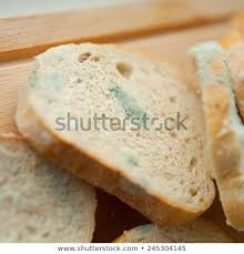Mold On Slices White Bread Mould Stock Photo Edit Now 245304145