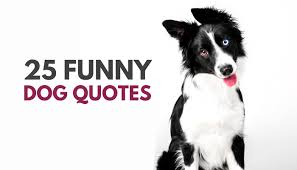 Funny Dog Quotes Unique 48 Cute Funny Dog Quotes Puppy Leaks