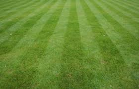 grass. Interesting Grass Lawn Intended Grass Y