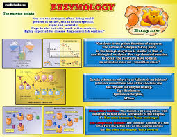 Enzyme Chart Enzymes Inhibitions Lecture Chart
