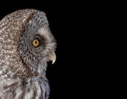 What Makes Bird Vision So Cool Audubon