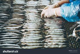 Fish Seafood Factory Stock Photo (Edit ...