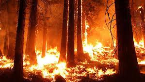 Billedresultat for skovbrande i californien
