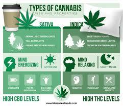 Indica Sativa Hybrid Chart Cbd Vs Thc Vs Sativa Vs Indica