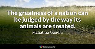 Gandhi Quotes Adorable The Greatness Of A Nation Can Be Judged By The Way Its Animals Are
