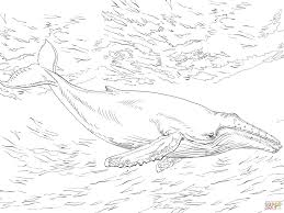 Small Picture Diving Humpback Whale coloring page Free Printable Coloring Pages