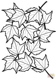 Small Picture Autumn Maple Leaves coloring page Free Printable Coloring Pages