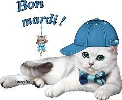 """Résultat de recherche d'images pour """"gif bon mardi chat"""""""