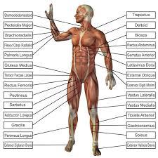 Amazon Com Laminated 24x24 Poster Anatomy Of Human Body