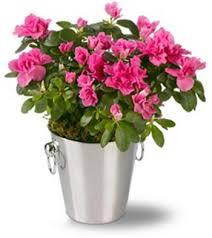 Image result for گلهای آپارتمانی