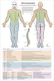 Chiropractic Wall Charts
