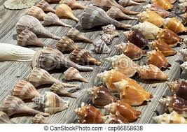 Close Up Of Seashell Collection On Weathered Boards