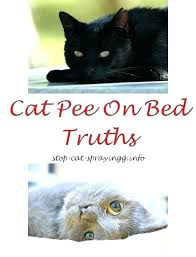 how to get cat urine smell out of couch how to get cat urine smell out