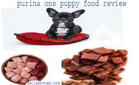 Top 5 Purina One Puppy Food Review Buyers Guide