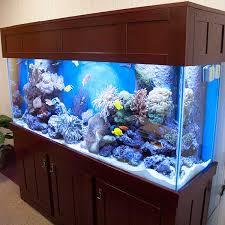 aquarium for office. aquarium livestock for office
