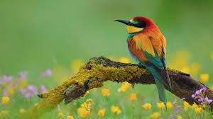 images of flowers and birds.  And Flowers And Birds Desktop HD Wallpapers With Images Of And Birds