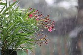 free photo botany rainy rain raining