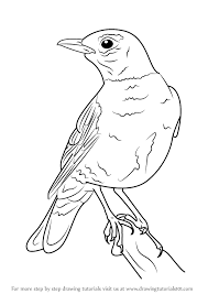 Small Picture American Robin Drawing EasyRobinPrintable Coloring Pages Free
