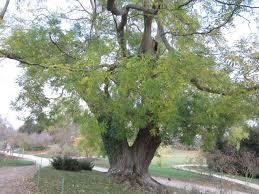 """Résultat de recherche d'images pour """"arbre parc de versailles"""""""