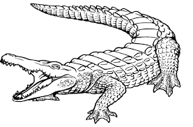 Awesome Crocodile Page To Color Design Printable Coloring Sheet